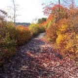 NH Fall Foliage