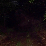 Orbs with mist (a horse?) on the Southeast side of Archers Pond.