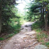 Brook Trail Near Summit of Mount Major