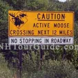 "Moose Alley - Sign along Rt. 3 in Pittsburg NH warning of active Moose crossing. Even though it says ""No Stopping in Roadway"" you might find this impossible as Moose will stop traffic."