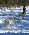 Dog Sledding in the White Mountains of NH - Article