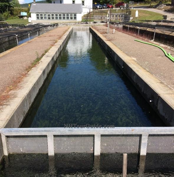 Powder Mill Fish Hatchery New Durham NH